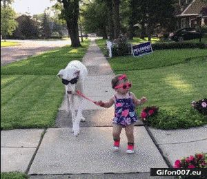 Funny Video, Baby, Dog, Glasses, Gif