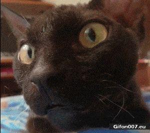 Funny Video, Cat, Big Eyes, Gif