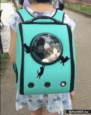 Funny Video, Cat in a Bag, Gif