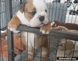 Funny Video, Cute Puppy, Dog, Gif