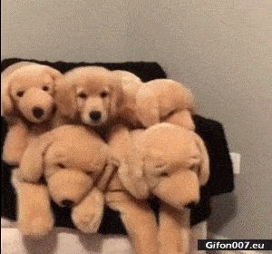 Funny Video, Dog, Plush Dog, Gif