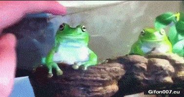 Funny Video, Finger, Frog, Gif