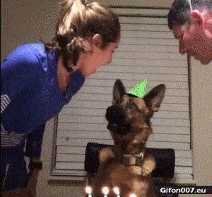 Funny Video, Happy Birthday, Dog, Gif