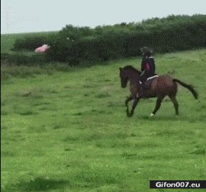 Funny Video, Horse Riding, Fail, Car, Gif