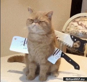 Funny Video, Cat, Halloween, Gif