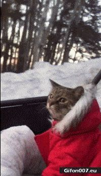 Funny Video, Cute Nice Cat, Gif