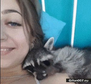 Funny Video, Cute Raccoon, Gif