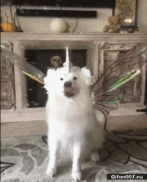 Funny Video, Dog, Costume, Gif