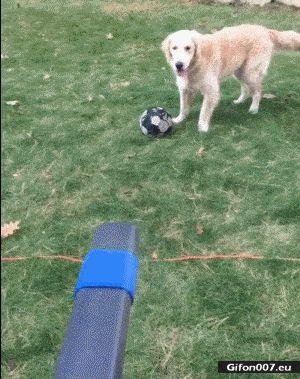 Funny Video, Dog, Fan, Wind, Gif