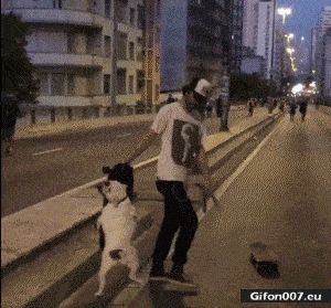 Funny Video, Dog, Skateboard, Gif