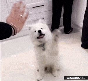 Funny Video, Dog, Wave, Gif