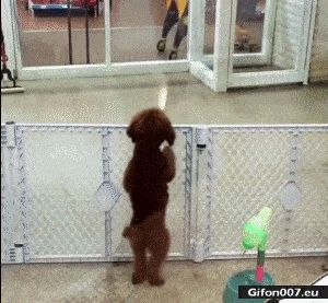 Funny Video, Happy Dog, Jumping, Gif