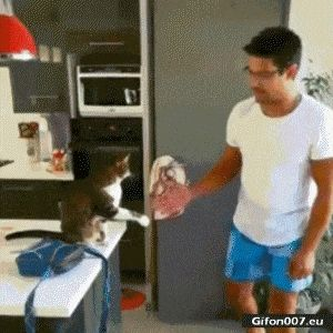 Funny Video, Man, Cat, Gif