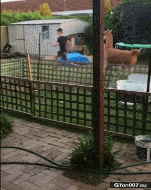 Funny Video, Animal Running, Boy, Gif