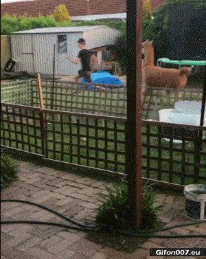 Funny Video, Animal Running, Boy, Gif