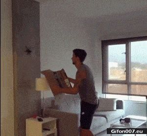 Funny Video, Big Spider, Gif