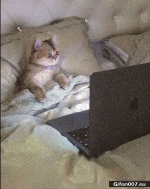 Funny Video, Cat, Watching Film, Gif
