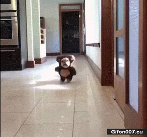 Funny Video, Cute Puppy, Costume, Running, Gif