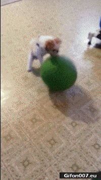 Funny Video, Dog, Dribble, Ball, Gif