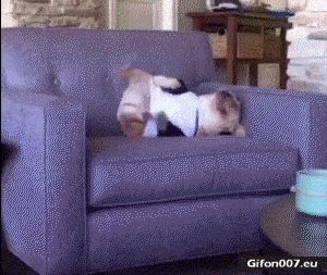 Funny Video, Fail, Dog, Fall, Gif
